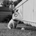 Frankenweenie, película animación Tim Burton